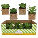 Succulent Mini In Paperwrapped Pot W/twine Bow 4ast 24pc Pdq Approx 4in H/ea Hangtag