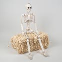 Skeleton Giant 35in Realistic Decor W/posable Joints/ht